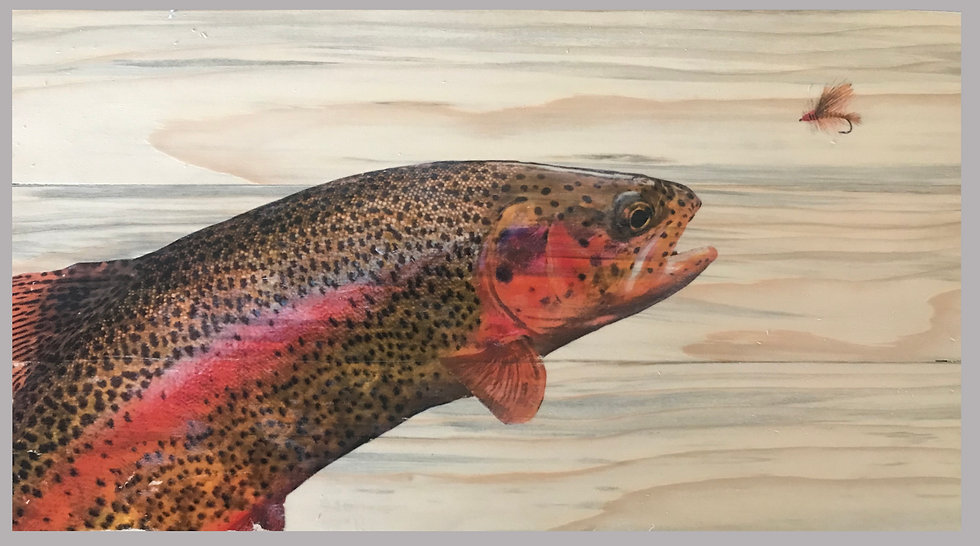 Wild Rainbow Trout Ready To Eat Stimulator Fly