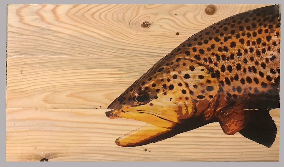 Stunning Brown Trout