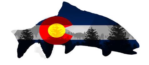 Colorado Flag Trout Logo