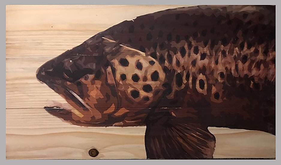 Big Brown Trout Art -18in Wide by 11in Tall