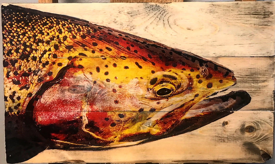Rainbow Trout with Kype Jaw