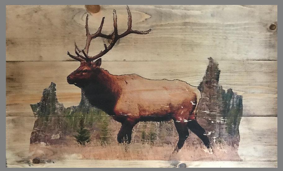 Wild Elk -18in Wide by 11in Tall
