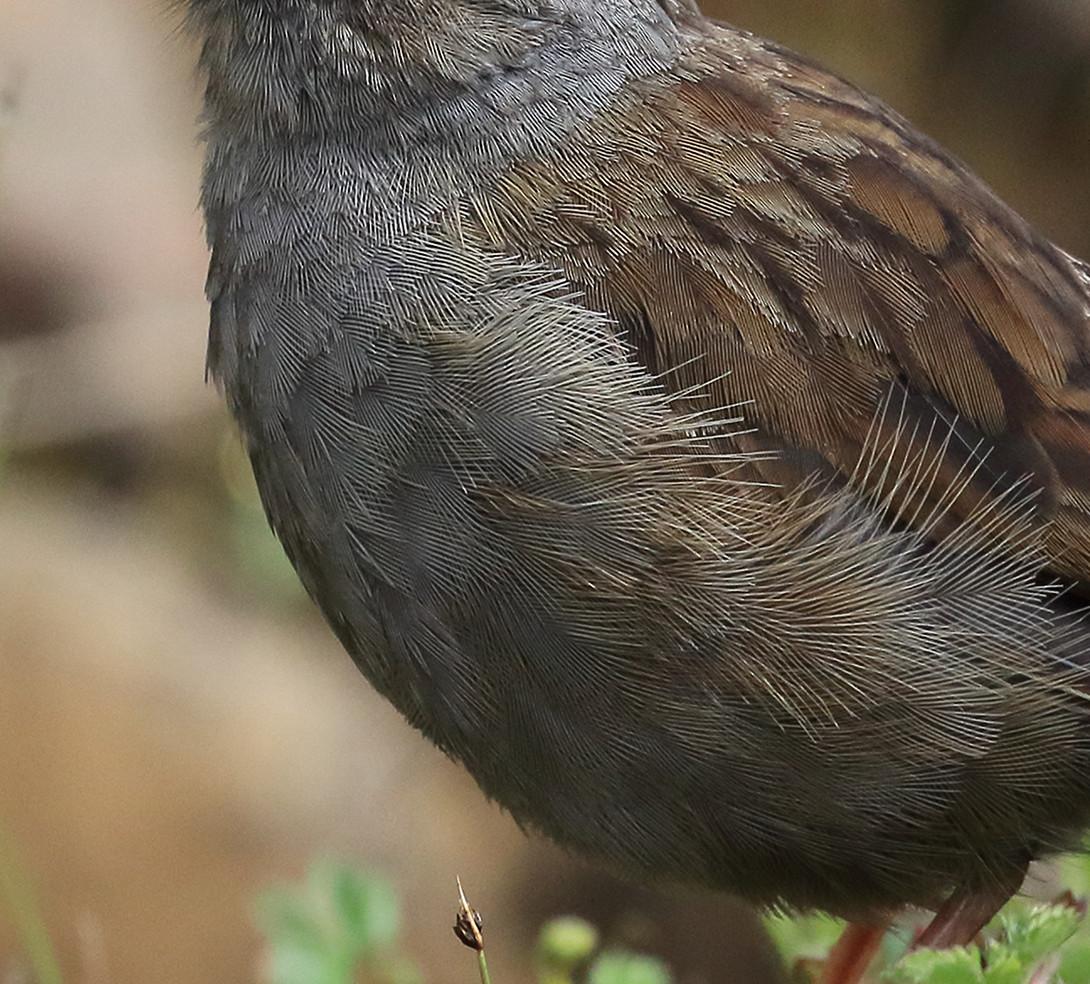 San Gerardo birding tour.jpg