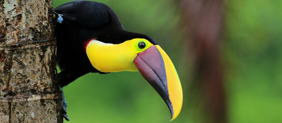 Esquipulas birdwatching tour