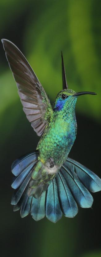 Hummingbird photography