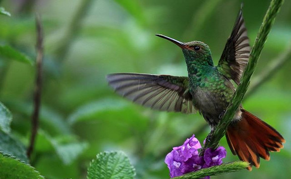 Manuel Antonio birdwatching #manuel_antonio_birdwatching