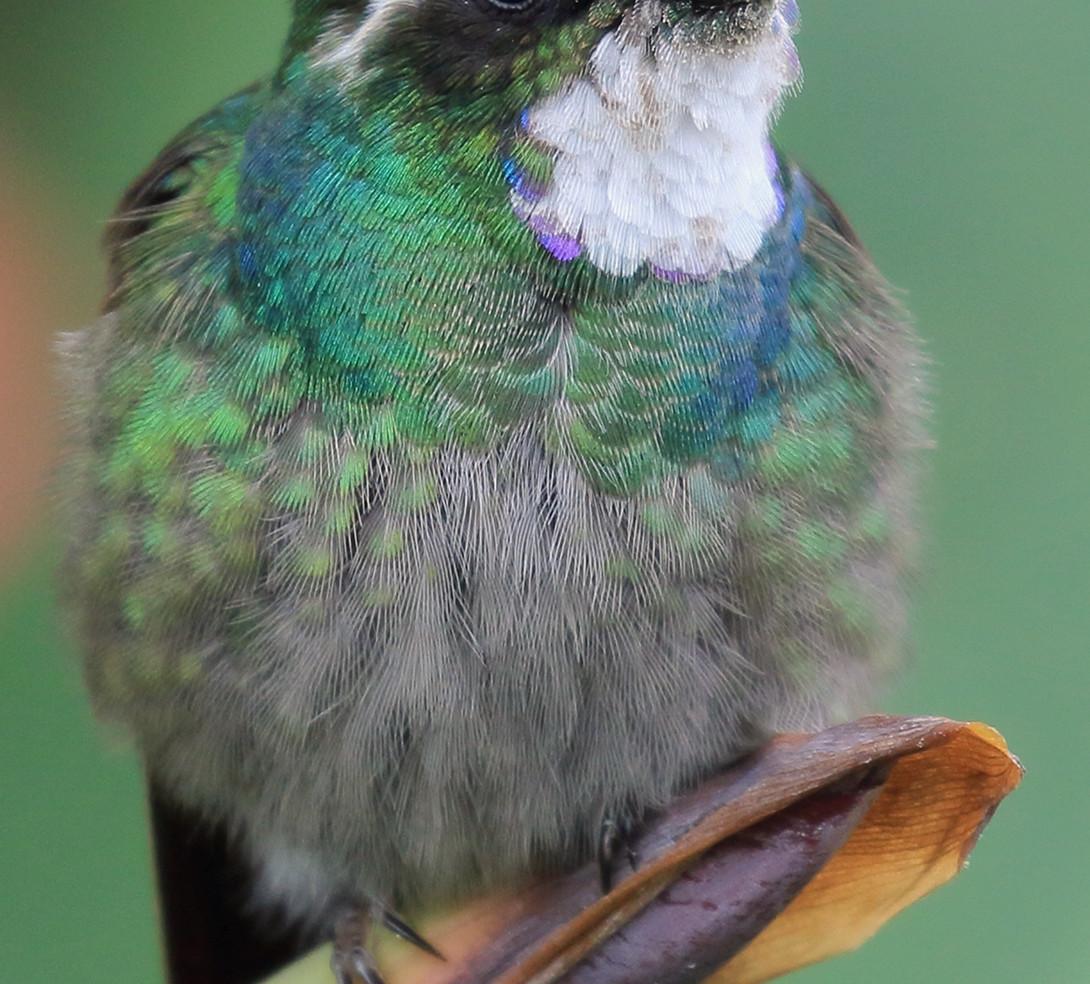 San Gerardo de Dota birding tour a.jpg