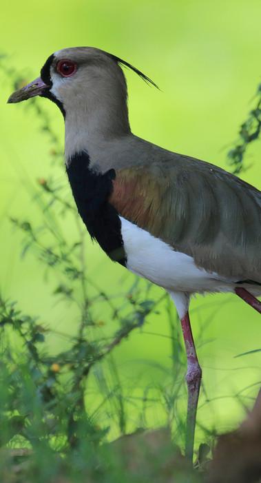 El Rey marsh birding.jpg