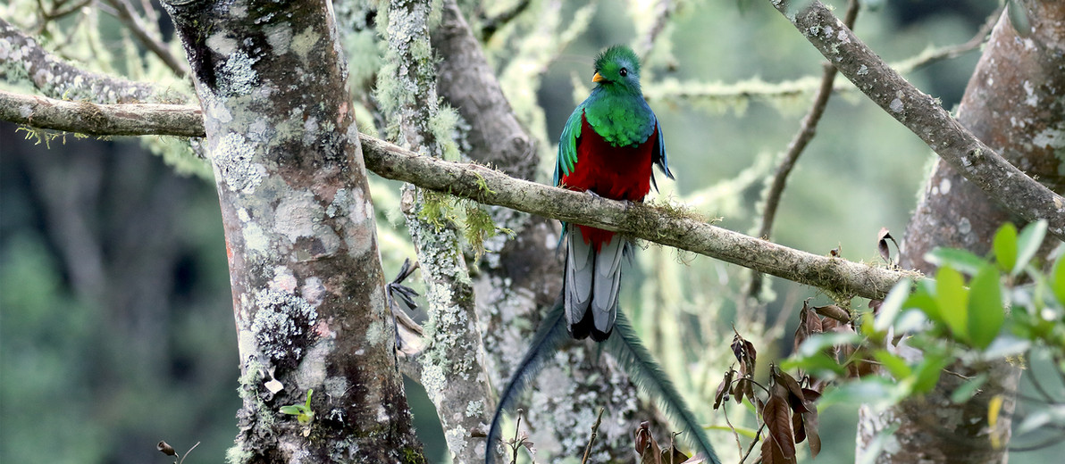 San Gerardo de Dota birding tour