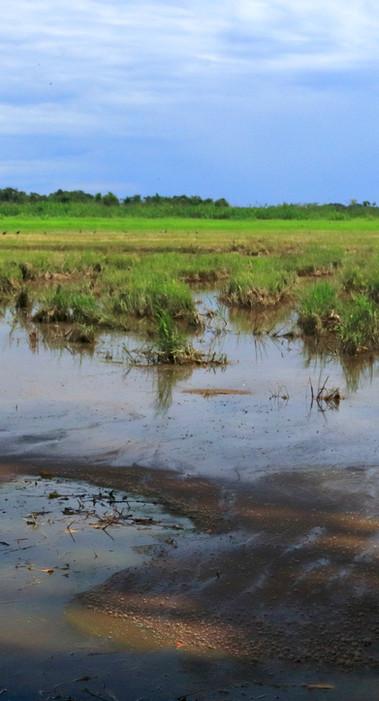 El Rey Marsh Landscape s.jpg