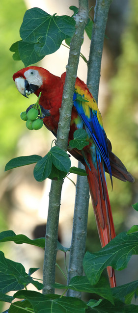 Carara birding tour.jpg