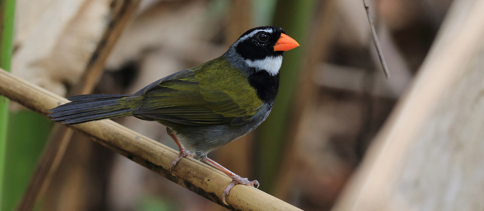 Esquipulas bird watching tour