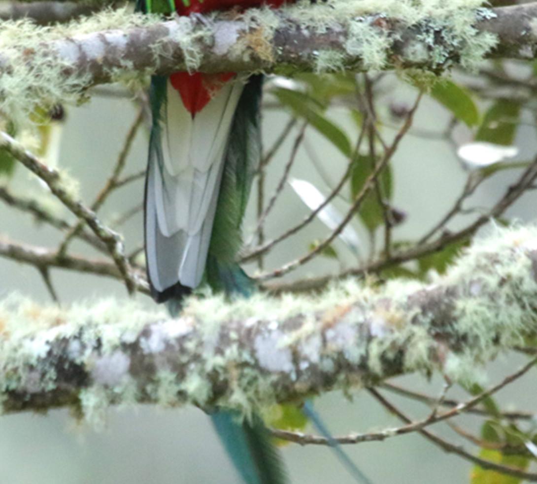 San gerardo de Dota birding tours.jpg
