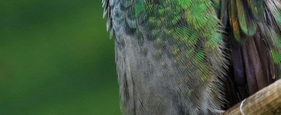 Esquipulas birding tour.jpg
