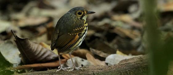 Carara birding tour 1.jpg