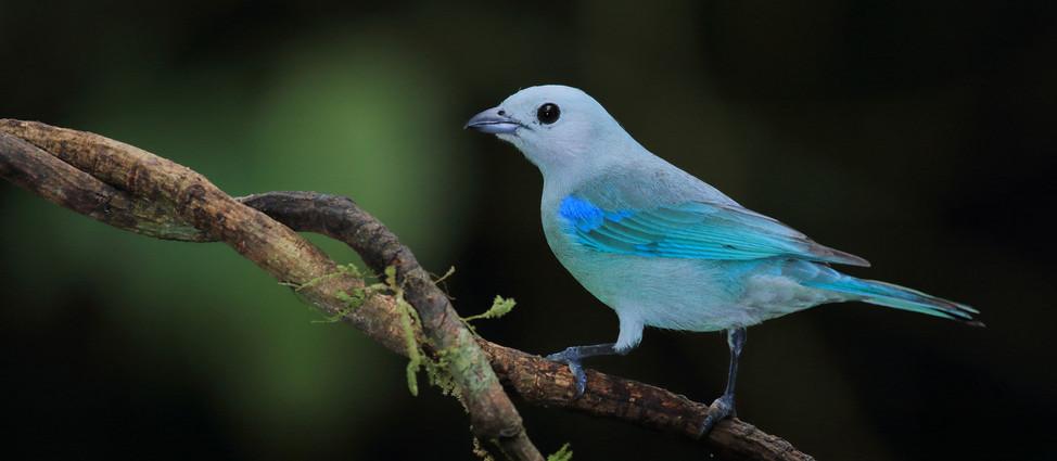 Manuel Antonio birdwatching