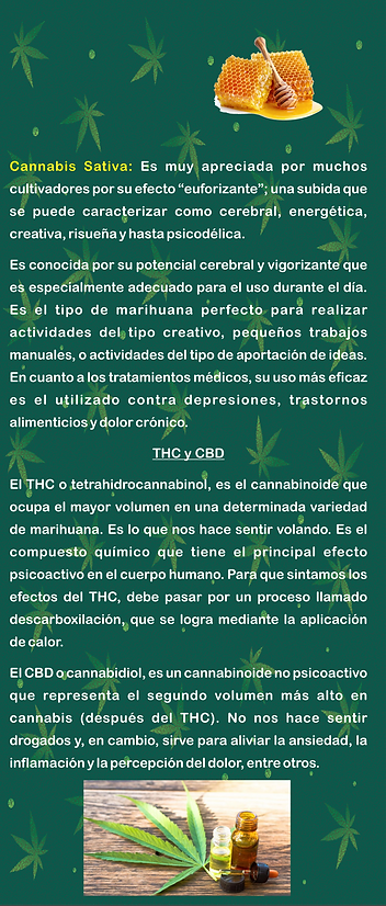Flyer cannabis 3.png