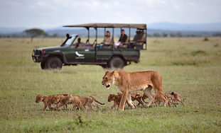 Safari at Grumeti Serengeti Tented Camp,