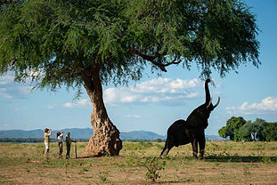 Bush Walk, Nyamatusi, Mana Pools, Zimbab