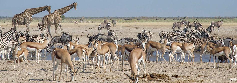 Etosha Region
