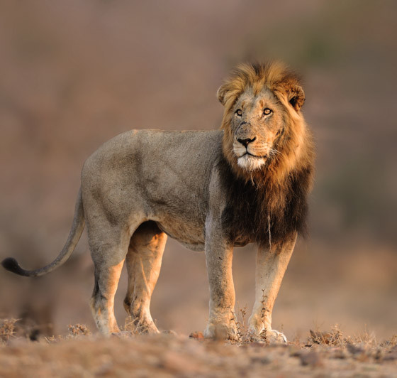 The call of the wild in Kruger National Park