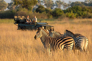 Game Drives, Little Tubu Camp, Okavango