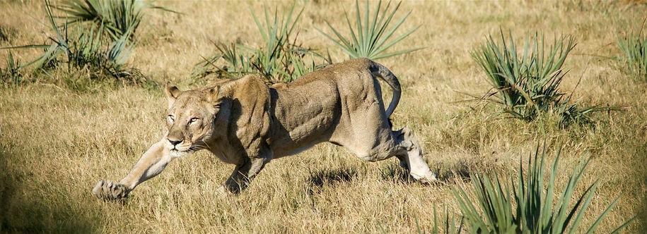 Experience wildlife Safari