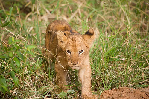 South Africa Tours and Safaris