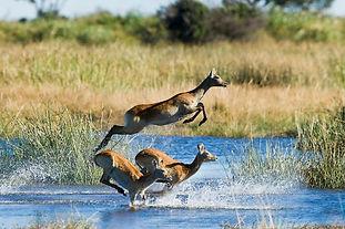 Customised Safaris