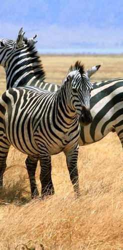 Ngorongoro Crater Camp