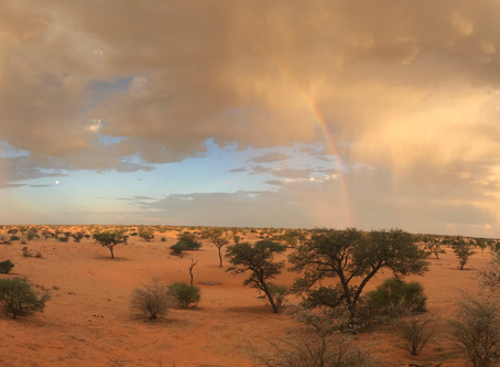 Kgalagadi Desert Wander (part 1)
