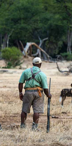 Safari bush walks in Mana Pools