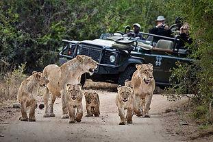 Safari_At_Londolozi