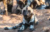 Mobile Safari in Botswana