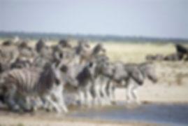 Namibia Tours and Safaris