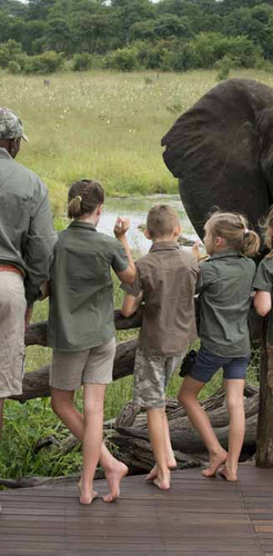 Take your kids on a safari