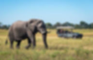 Elephant_Safari.jpg