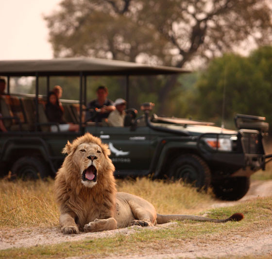Timeless Chobe and Delta Safari
