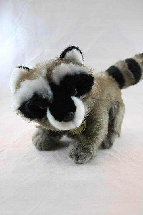 Raccoon        Aurora - Miyoni