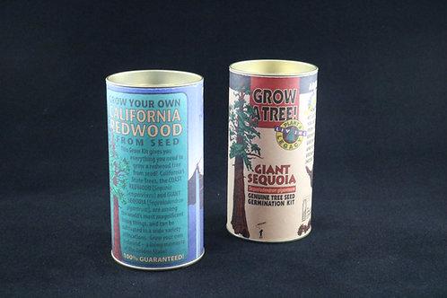 Redwood Tree Seed Kits