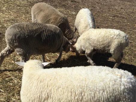 Wool Whispering