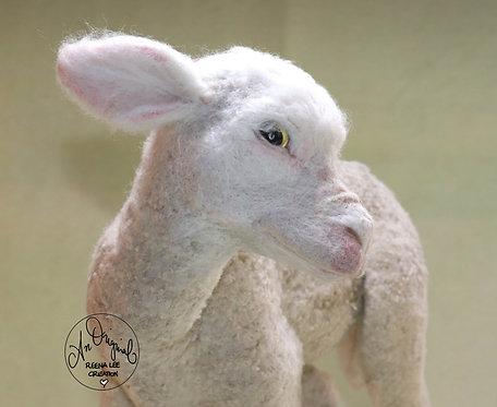 Daisy May Newborn Merino Lamb