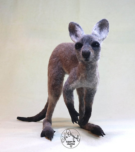 Miss Evie, the Grey Kangaroo