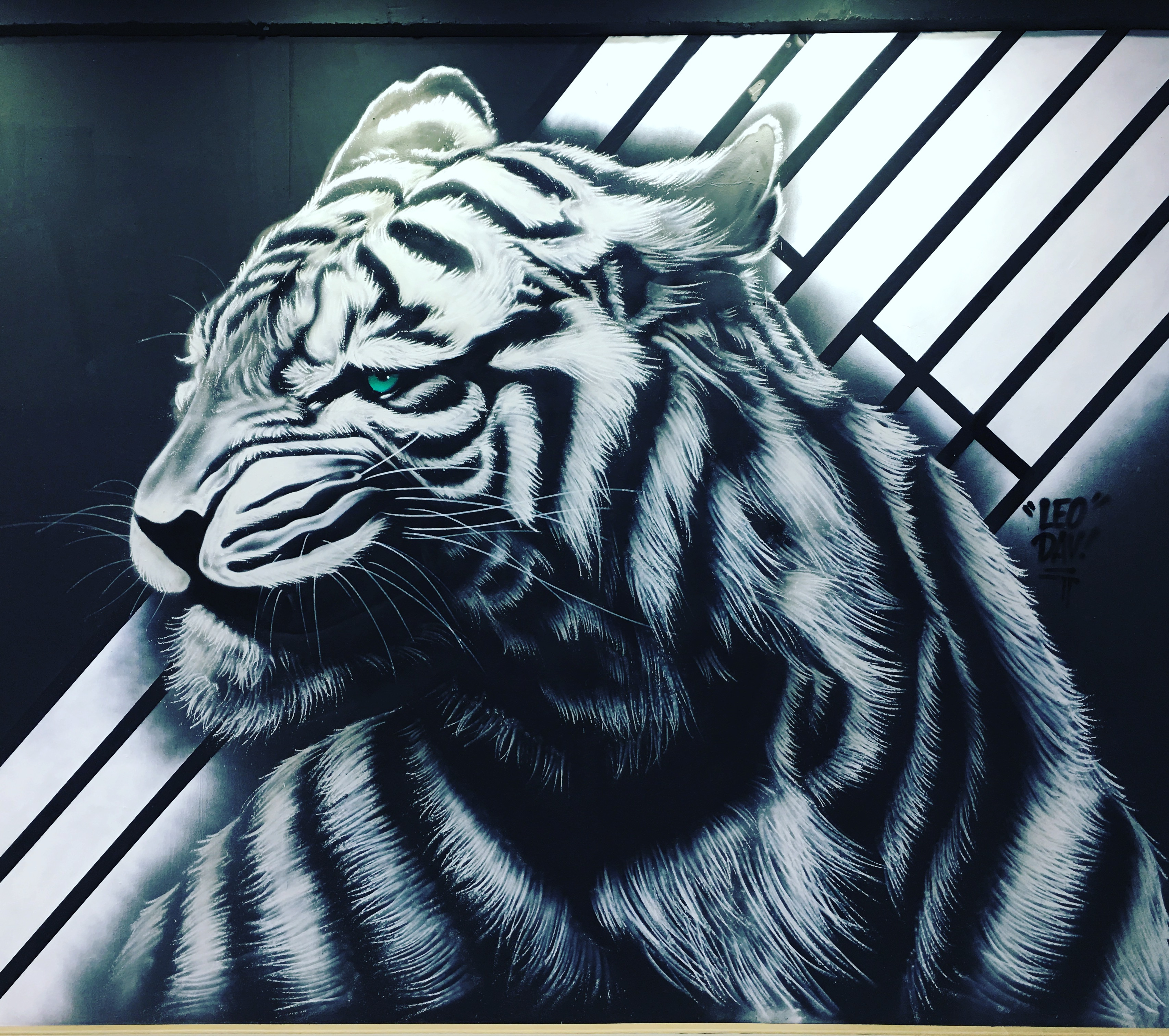 2017 K-tigers (3).jpg