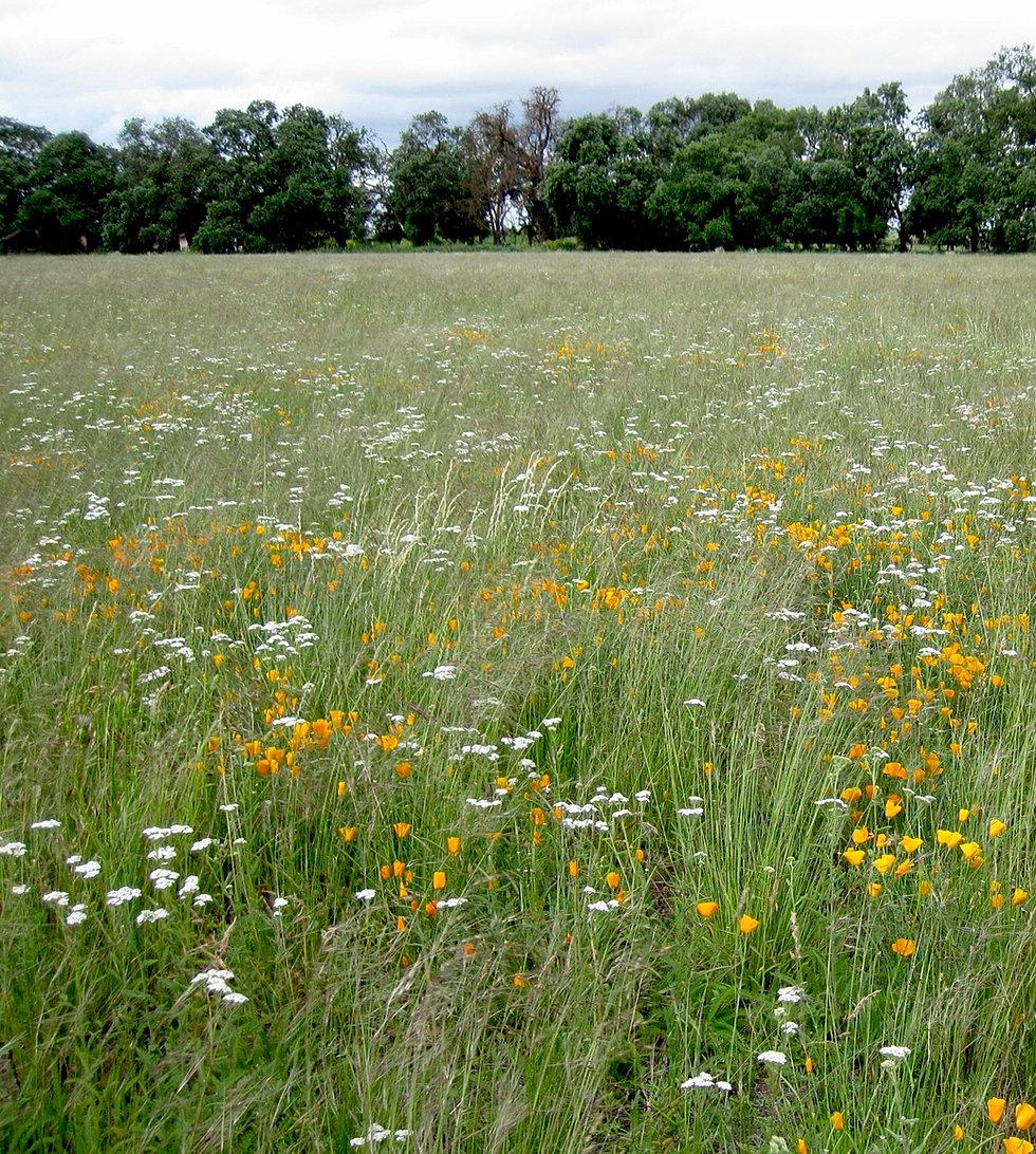 Hedgerow Homeowners Association: Hedgerowfarms