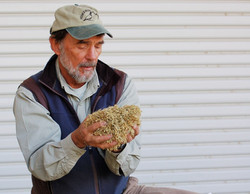 John Anderson with native seed