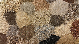 California Native Seeds