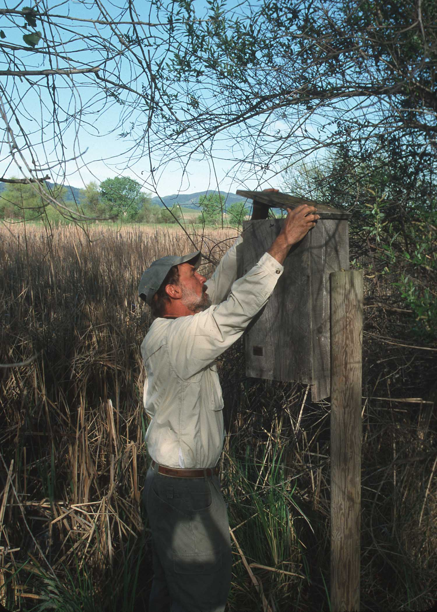 John Anderson checking a bird box