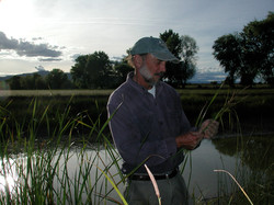 John Anderson and Carex barbarae