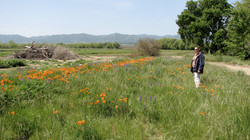 Marsha Anderson in a seeded meadow